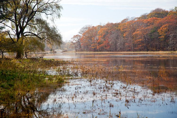 Chubb's Creek after Hurricane Sandy – Photography by Barby Almy