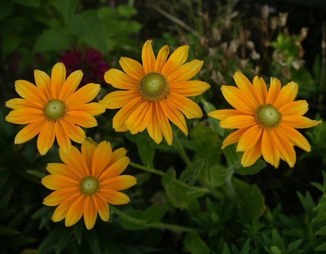 Daisies – Photograph by Barby Almy