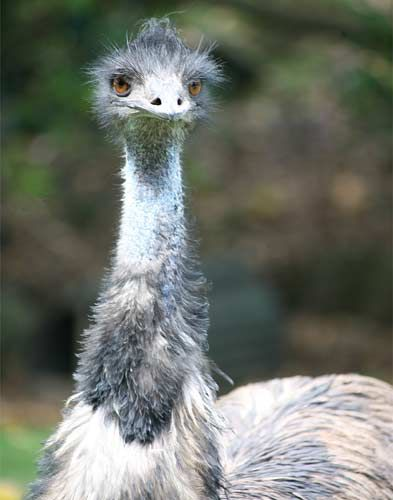 """Smile""… Emu, New Zealand – Photography by Barby Almy"