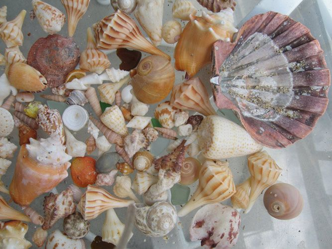 Florida Shells – Photography by Barby Almy