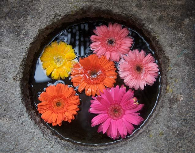 Gerbera Daisies by Barby Almy