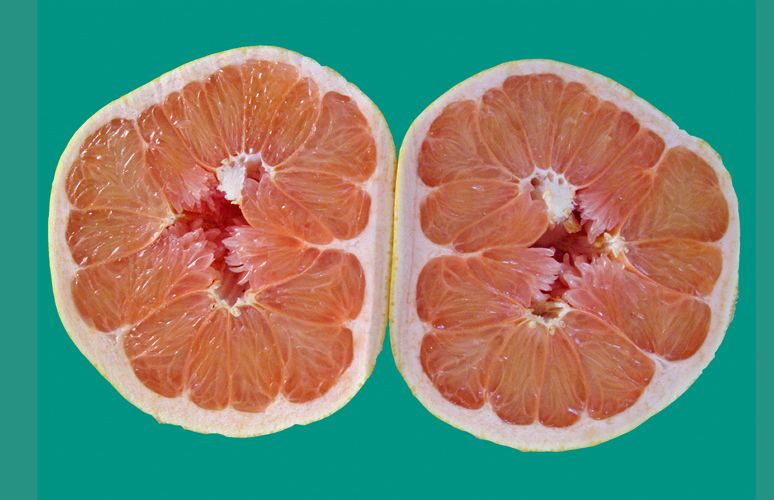 Funky Grapefruit – Photography by Barby Almy