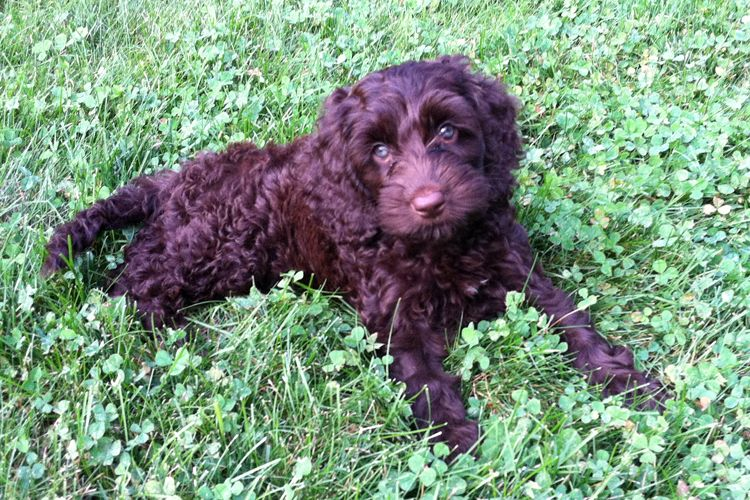My New Puppy Needs a Name – B H Almy Photography