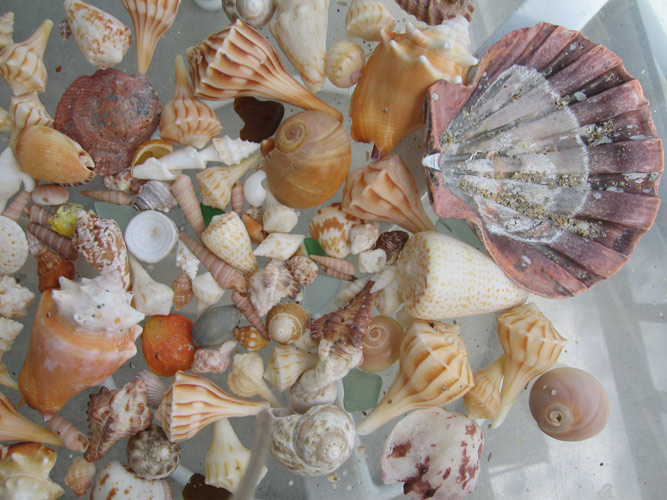http://www.beachstreetstudios.com/artists/barby-almy/nature/florida-shells-photography-by-barby-almy/