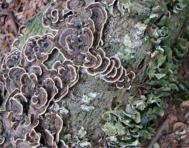 http://www.beachstreetstudios.com/artists/barby-almy/nature/a-fungus-amongus-photograph-by-barby-almy/