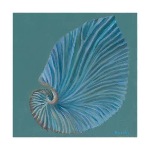 http://www.beachstreetstudios.com/artists/kathy-connolly/giclee/paper-nautilus-by-kathy-connolly/