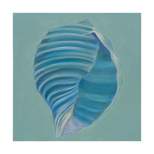 http://www.beachstreetstudios.com/artists/kathy-connolly/giclee/tun-shell-by-kathy-connolly/